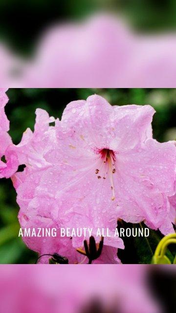 Amazing beauty all around